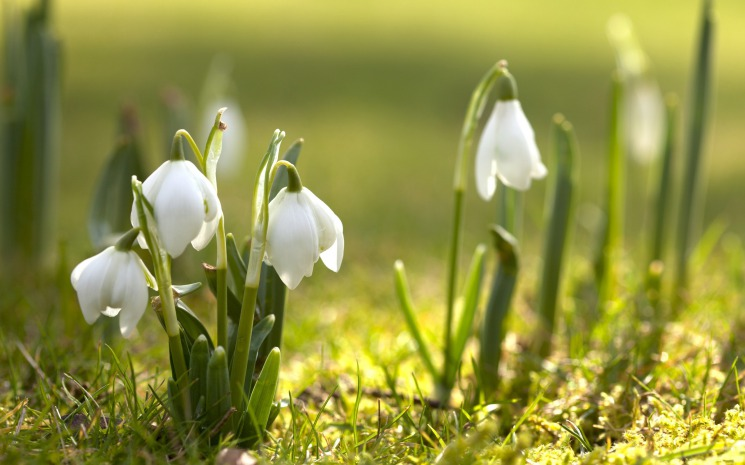 Удивительная и красивая подборка картинок Весна - 25 фото 1