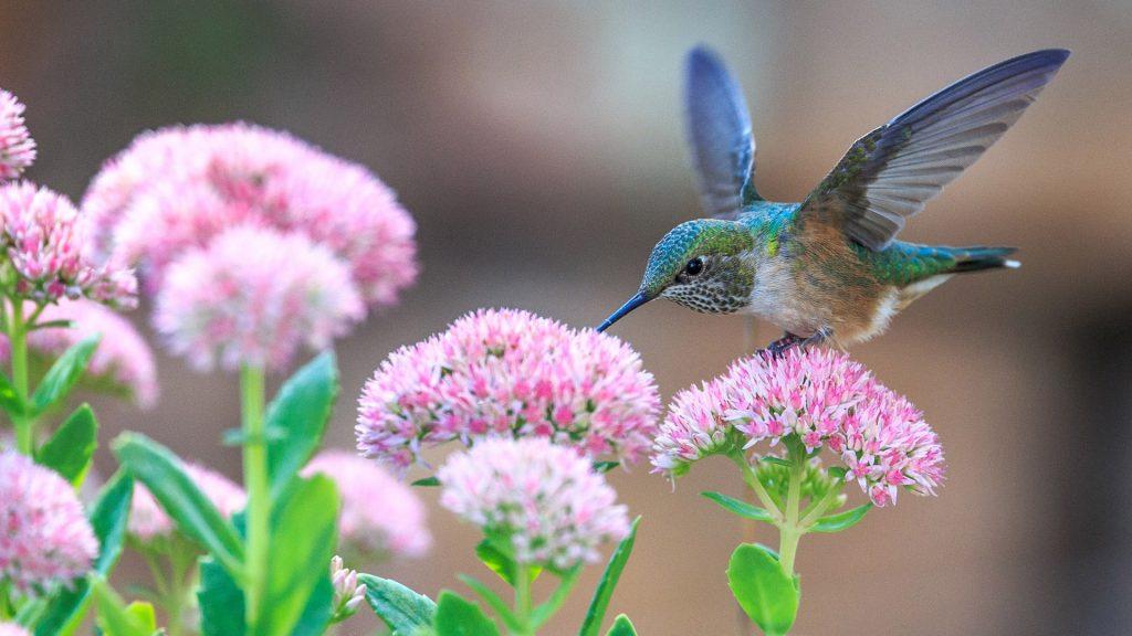 Удивительная и красивая подборка картинок Весна - 25 фото 12