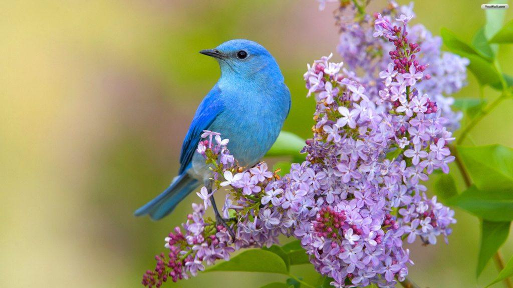 Удивительная и красивая подборка картинок Весна - 25 фото 13
