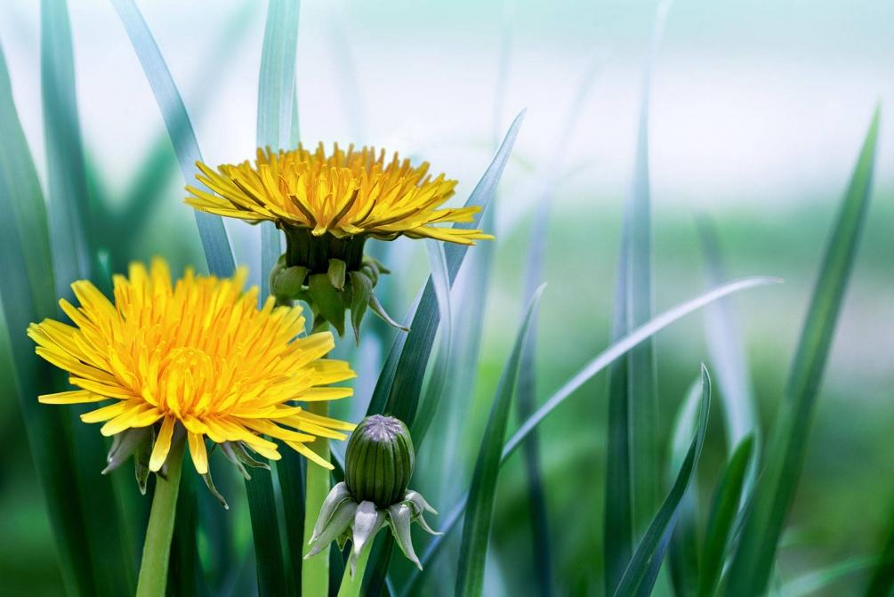 Удивительная и красивая подборка картинок Весна - 25 фото 14