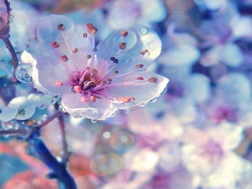 Удивительная и красивая подборка картинок Весна - 25 фото 15