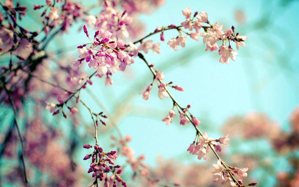Удивительная и красивая подборка картинок Весна - 25 фото 17