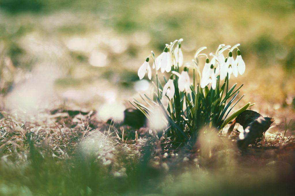 Удивительная и красивая подборка картинок Весна - 25 фото 18