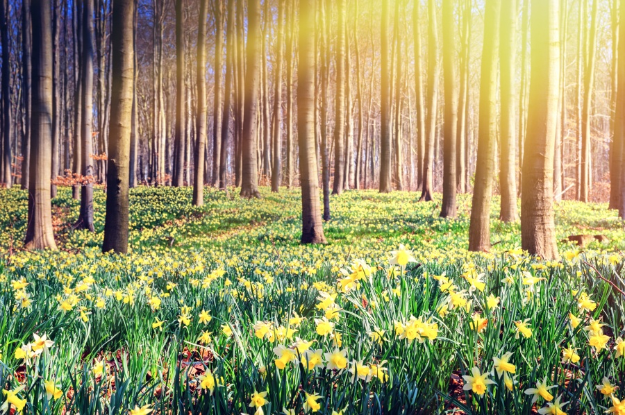 Удивительная и красивая подборка картинок Весна - 25 фото 4