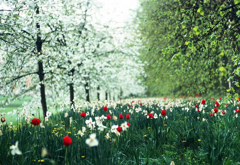 Удивительная и красивая подборка картинок Весна - 25 фото 6