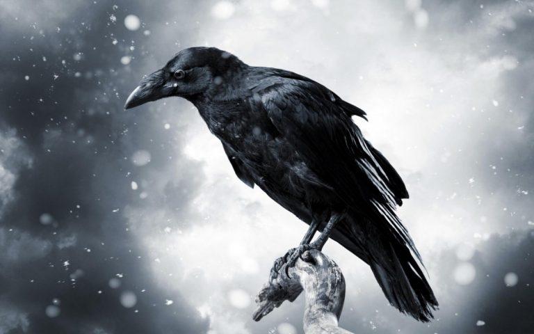 Классные и крутые картинки воронов, фото воронов - подборка 21