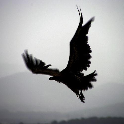 Классные и крутые картинки воронов, фото воронов - подборка 6