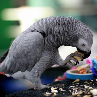 Красивые и прикольные фото, картинки попугая Жако - подборка 12