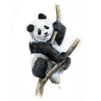 Красивые картинки и изображения панды, панд - подборка артов 2