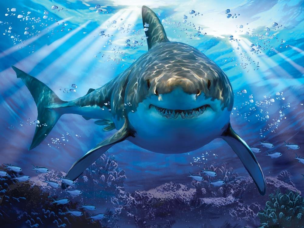 Красивые картинки и фото на тему - Большая белая акула 3