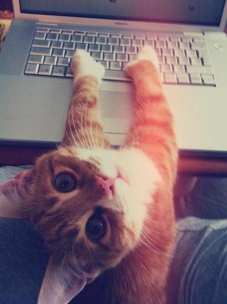 Красивые картинки котики и кошки на аву, аватарку - подборка 1