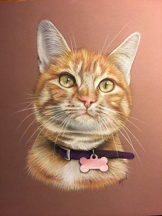 Красивые картинки котики и кошки на аву, аватарку - подборка 10