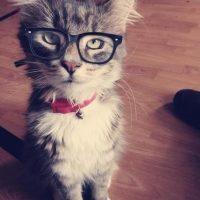 Красивые картинки котики и кошки на аву, аватарку - подборка 12