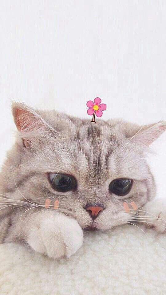 Красивые картинки котики и кошки на аву, аватарку - подборка 13
