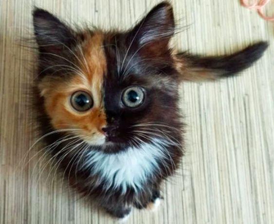 Красивые картинки котики и кошки на аву, аватарку - подборка 6