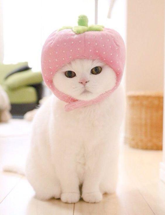 Красивые картинки котики и кошки на аву, аватарку - подборка 8