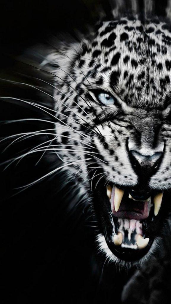 Лучшие картинки и обои на телефон Леопард - подборка 4