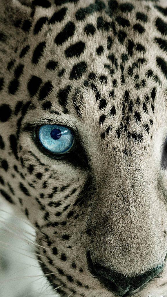 Лучшие картинки и обои на телефон Леопард - подборка 6