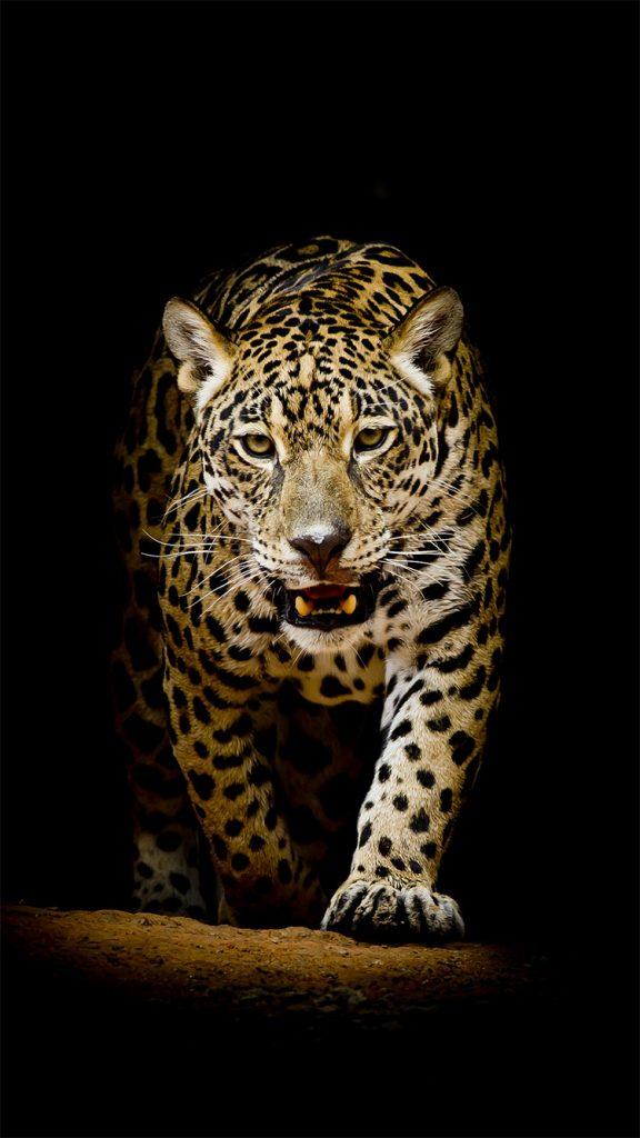 Лучшие картинки и обои на телефон Леопард - подборка 8