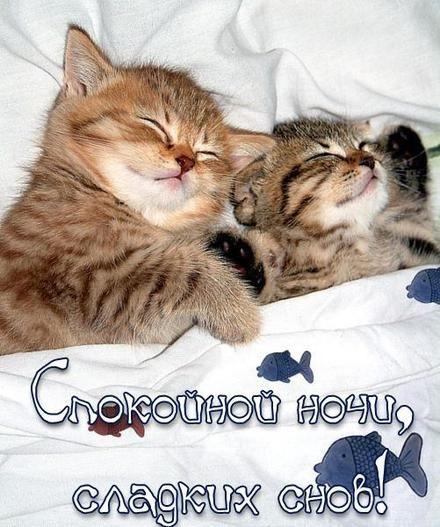 Картинки Спокойной Ночи - красивые и оригинальные 20 фото (5)