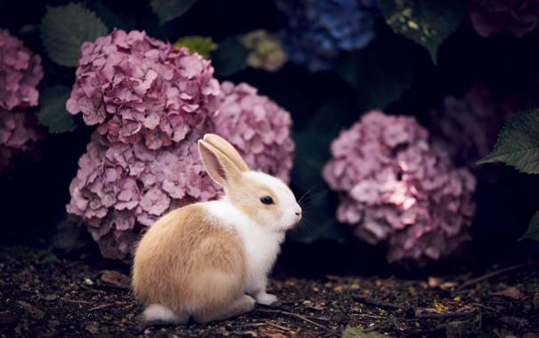 Красивые картинки, фото, обои, фоны кроликов - подборка 1