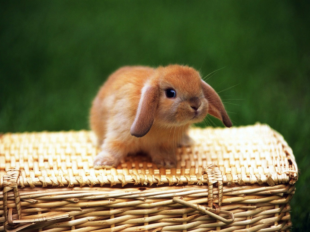 милый кролик картинка кто-то