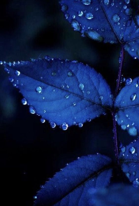 Красивые обои фон синий - подборка 25 картинок (11)