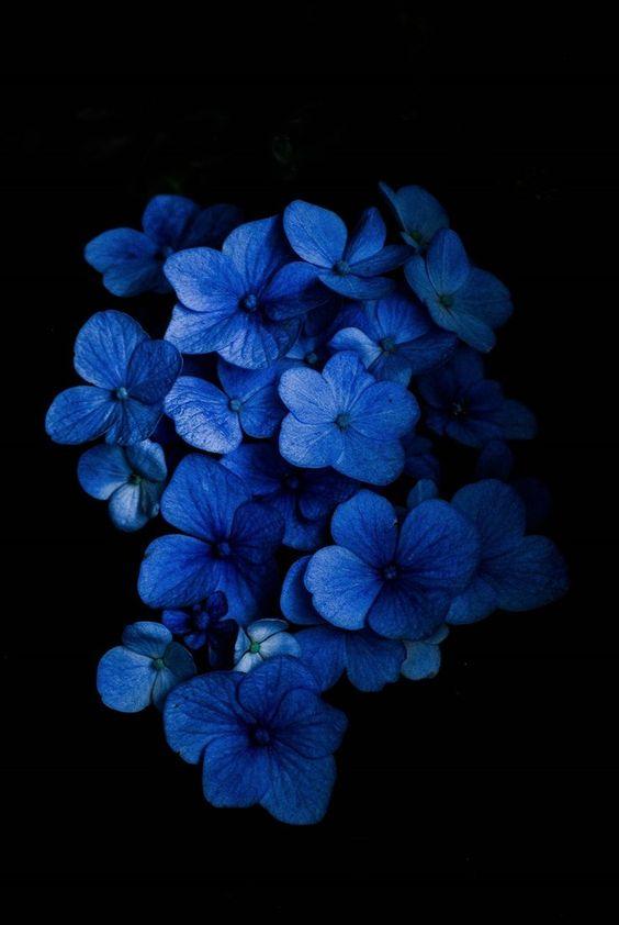 Красивые обои фон синий - подборка 25 картинок (4)