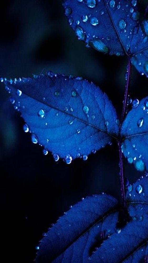 Красивые обои фон синий - подборка 25 картинок (5)