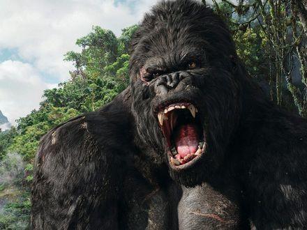 Красивые фото и картинки гориллы - подборка 16 фотографий 12
