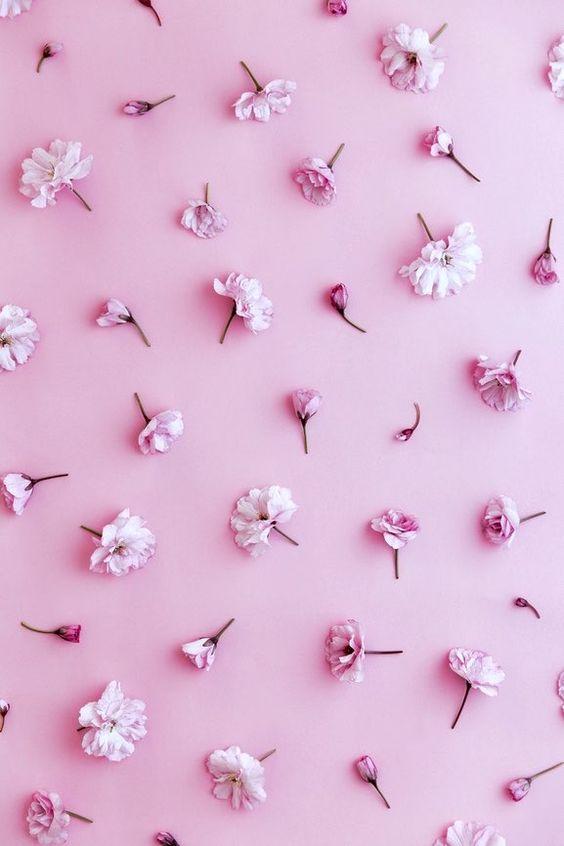 Розовый фон и обои   красивые картинки и заставки 21 фото (15)