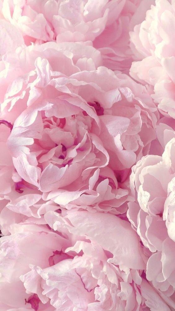 Розовый фон и обои   красивые картинки и заставки 21 фото (19)