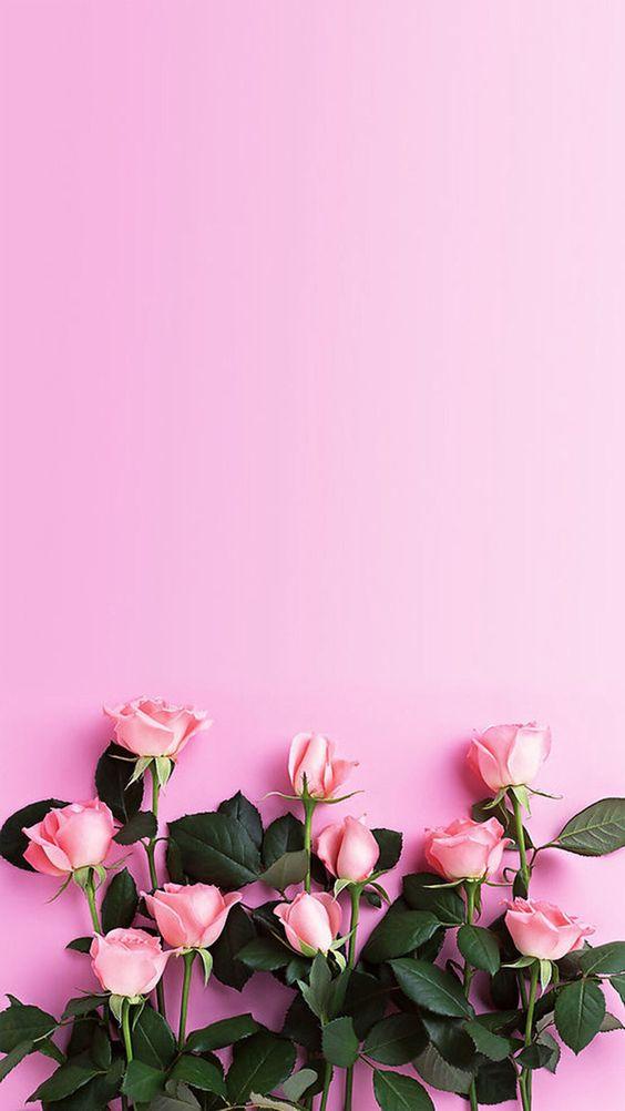 Розовый фон и обои   красивые картинки и заставки 21 фото (4)