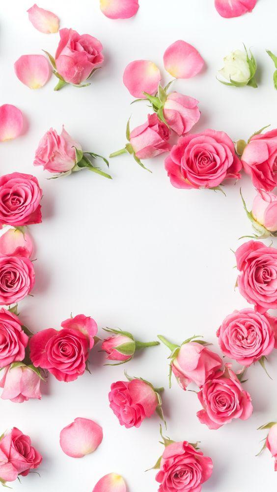Розовый фон и обои   красивые картинки и заставки 21 фото (8)