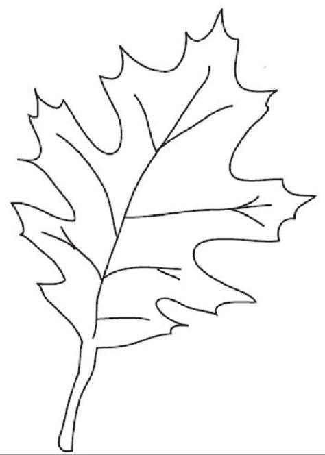 Шаблон кленовый лист, интересные рисунки шаблоны кленовый лист 14