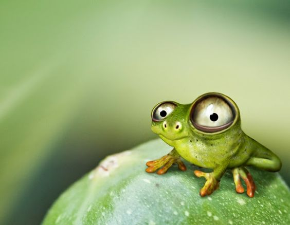 Лягушка рисунок, картинки, изображения - подборка 25 фото 8