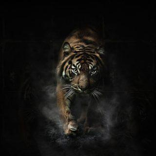 Классные картинки на рабочий стол Лев и Тигр   подборка (16)