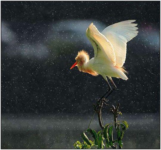 Красивые картины с дождем - подборка 17 изображений (16)