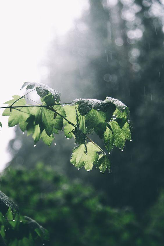 Красивые картины с дождем - подборка 17 изображений (2)