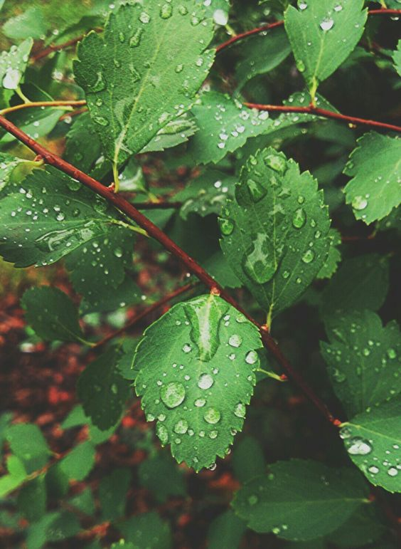 Красивые картины с дождем - подборка 17 изображений (4)