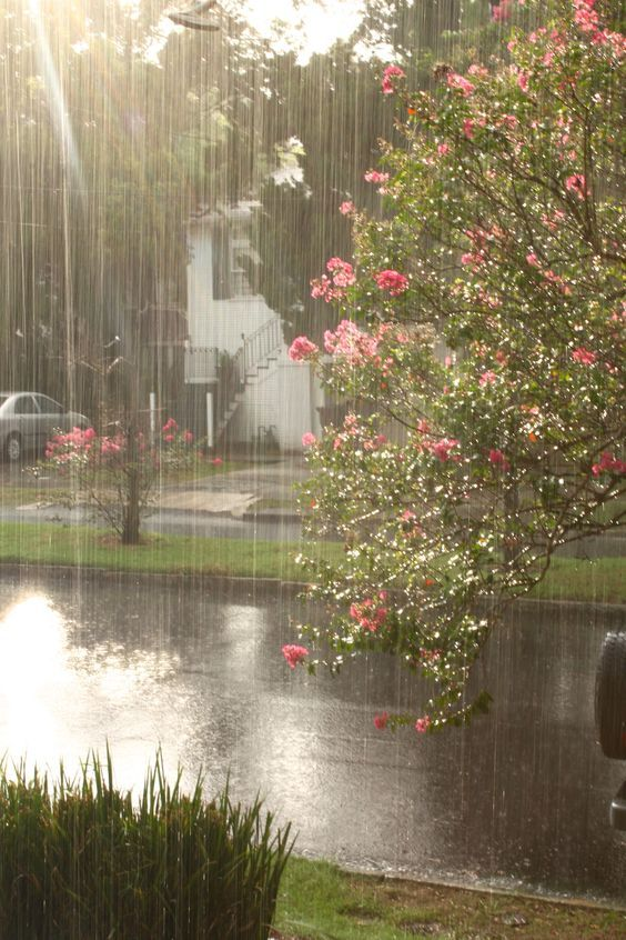Красивые картины с дождем - подборка 17 изображений (7)