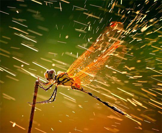 Красивые картины с дождем - подборка 17 изображений (9)