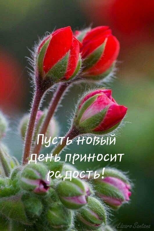 Открытки с пожеланием хорошего дня и отличного настроения (8)