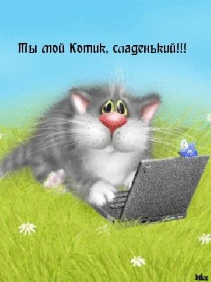 мой ты котик картинки (1)