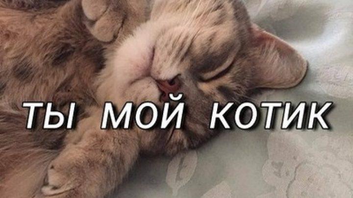 Картинки с надписью целую тебя котик, поздравительная для крестной