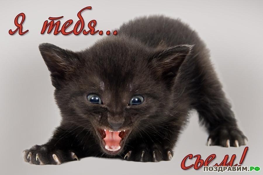 мой ты котик картинки (3)