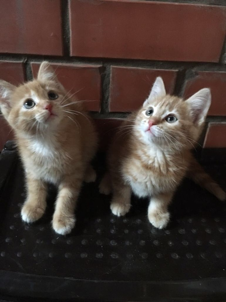 мой ты котик картинки (4)