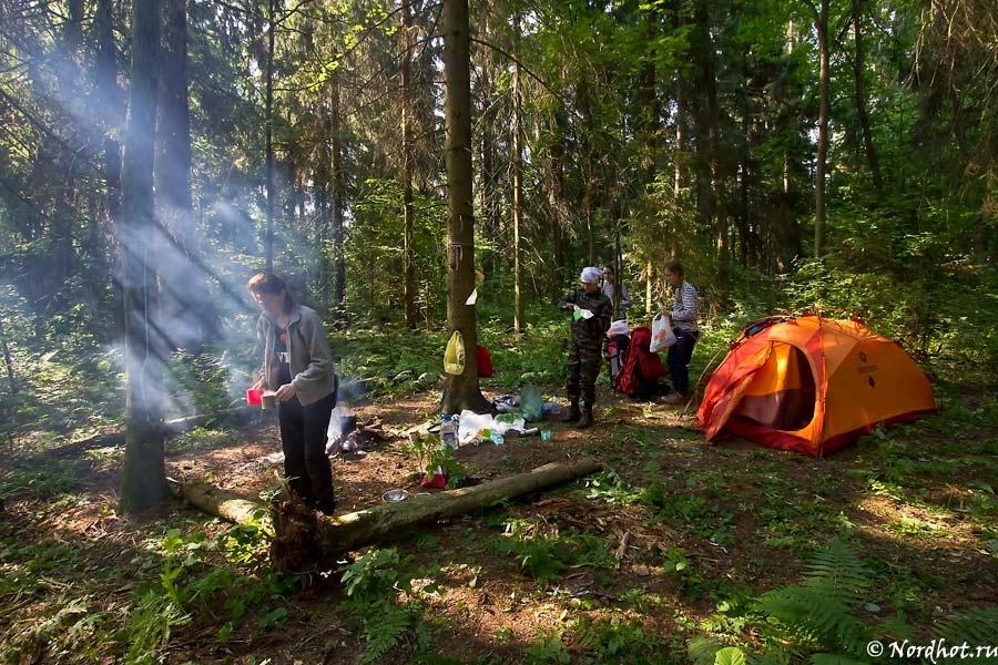 писк картинки про поход в лес только