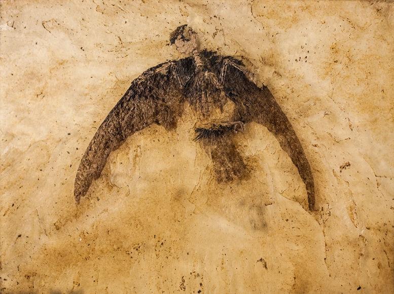 Динозавры в наше время фото008
