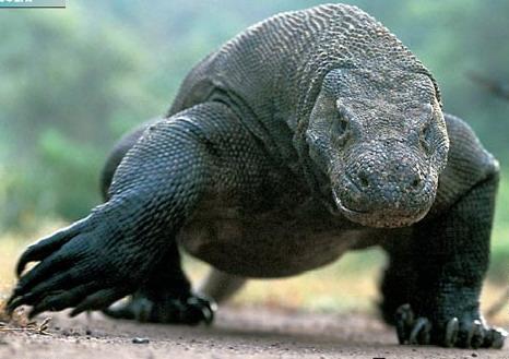 Динозавры в наше время фото009